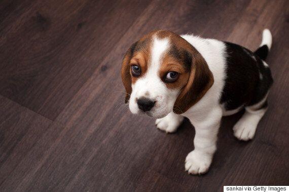'사람은 사람보다 개를 더 사랑한다'는 연구결과가