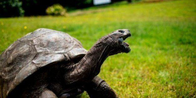 세계 최고령 거북이 조나단은 보질 못하고 냄새도 못 맡지만 청각은