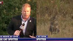 생방송 뉴스에 완벽한 타이밍으로 등장한 고양이의