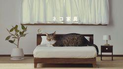고양이를 위한 수작업 가구가 나왔다(사진,