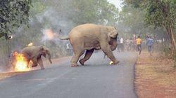 코끼리들에게 불덩어리를 던진 사람들의