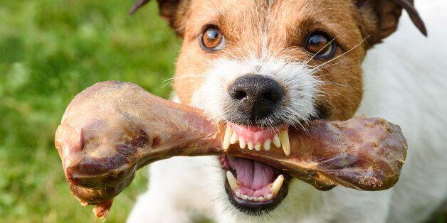 Dog demonstrating teeth and
