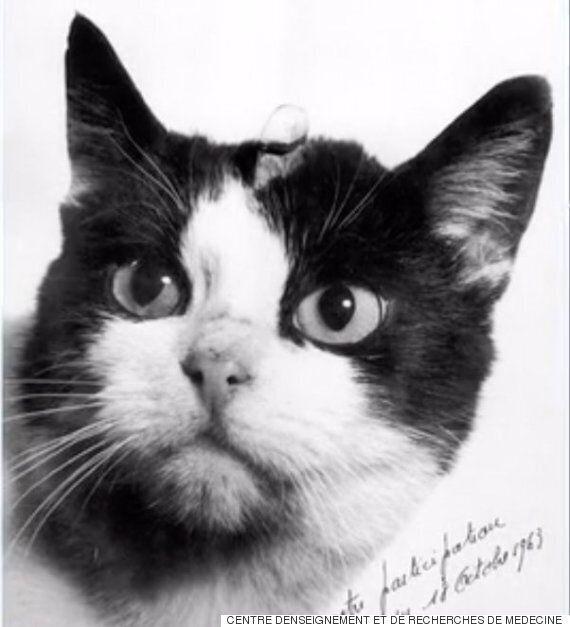 세계 최초로 우주에 간 고양이는 사람들에게
