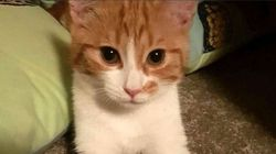 '뉴질랜드 실세'인 이 고양이의