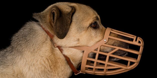 Profile of a crossbreed dog wearing a plastic basket dog
