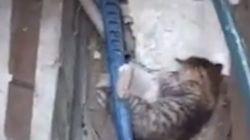 길고양이 학대범을 20분 만에 찾아낸