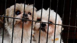 미 캘리포니아가 '개 농장'의 반려동물 판매를 전면