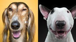 개들의 가장 '인간적인' 표정을
