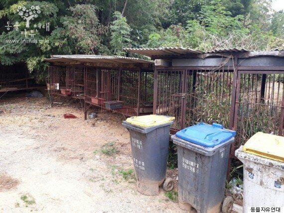'음식물 쓰레기 처리 기계'로 살아온 개들이 구조되는 순간