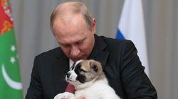 강아지 선물 받은 푸틴의 반응은