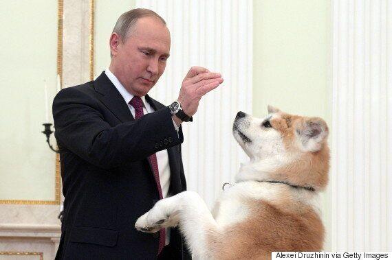강아지를 선물 받은 푸틴의 표정은 예상외로