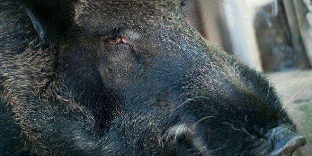 안락사를 기다리는 폐업 동물원의