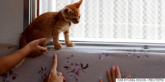 일본 열차에 고양이 30마리를