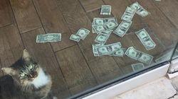 이 고양이 옆에 지폐가 한가득 쌓여 있었던