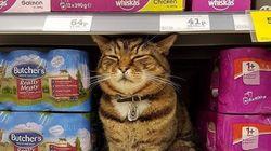 영국의 한 슈퍼마켓에 고양이 동상이