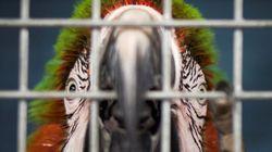 마이애미 최대 규모 동물원이 허리케인에