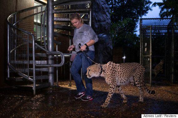 마이애미 최대 규모 동물원이 허리케인 어마에 대비하는