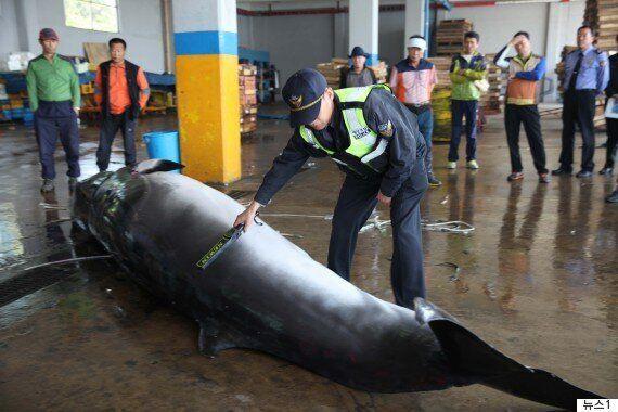 울산에서 검찰과 경찰이 고래고기를 둘러싼 싸움을 벌이고