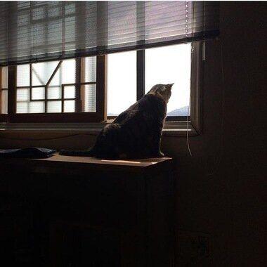 모험가 고양이의