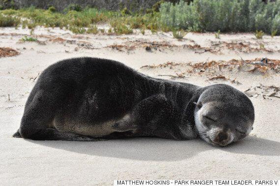 해변에서 낮잠이 든 새끼 물개는 귀염 그