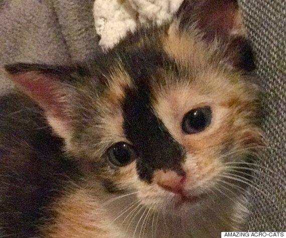 200마리 넘는 고양이를 살린 고양이