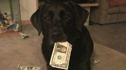 이 강아지가 돈을 '저축'하는