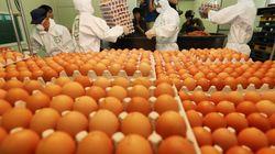 살충제 달걀 농장 대부분이 '친환경 농가'였다는 충격의