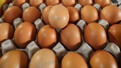 '살충제 계란' 농장은 49개로 최종