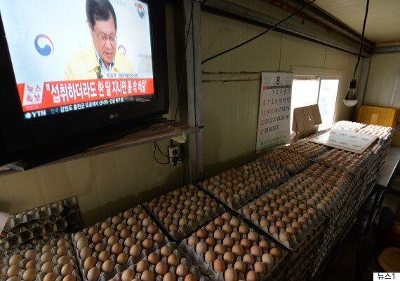 이제부터 계란 먹을까?