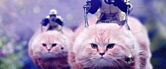 '#바르셀로나' 해시태그에 고양이 사진이 뜨는