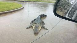 텍사스의 홍수에서 우리가 상상도 못 했던 거대한 위험은 바로