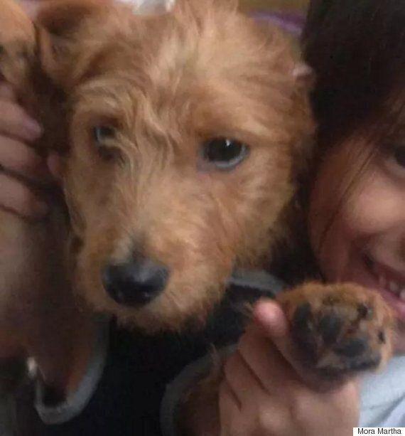 아이는 실종된 개를 찾기 위해 손으로 포스터를 그렸다. 그런데 개를