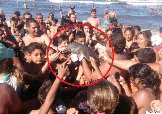 해변으로 떠밀려온 새끼 돌고래 만지고, 셀카 찍은 뒤 벌어진 일(사진