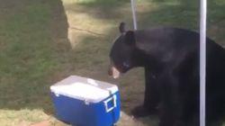 '무례한' 곰이 생일파티에