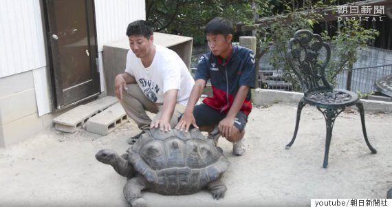 동물원에서 사라진 거북이가 2주 동안 도망친