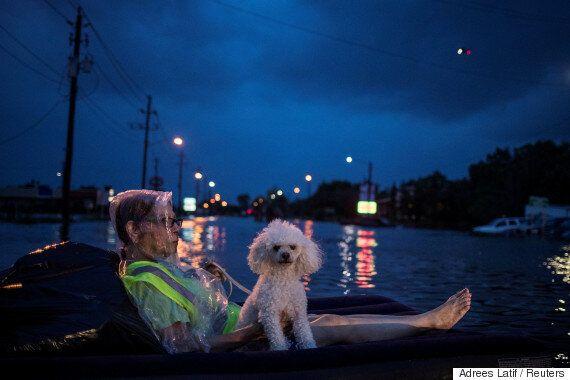동물과 함께 허리케인에서 탈출한 휴스턴의 사람들(사진