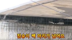 비둘기들이 다리 밑에 산 채로 갇힌 모습에 시민들이