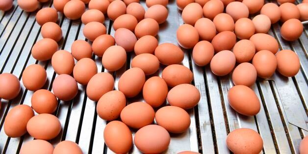 A picture taken in a the poultry farm in Hesbaye region near Namur on August 12, 2017 shows eggs being...