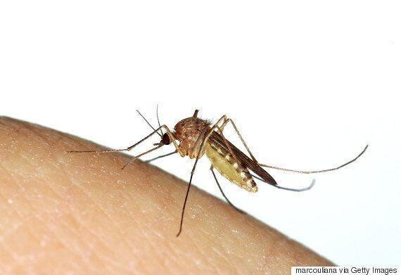 라벤더 오일과 물만 있으면 모기 퇴치에 성공할 수
