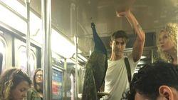 뉴욕 지하철에 공작새가