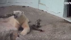 2년 만에 폭로된 '에버랜드 북극곰'의