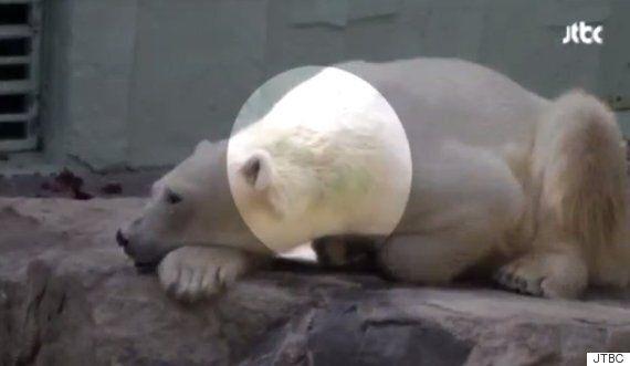 2년 만에 폭로된 '에버랜드 북극곰'의 처참한