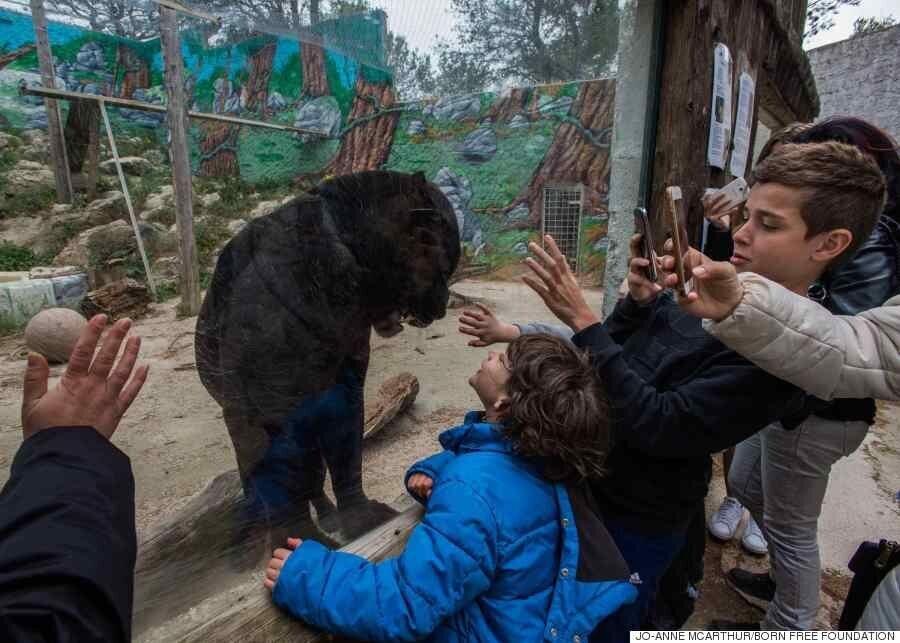 이 사진들을 보면 동물원을 다시 생각하게 될