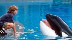 영화 '프리윌리' 범고래가 살았던 수족관' 최신