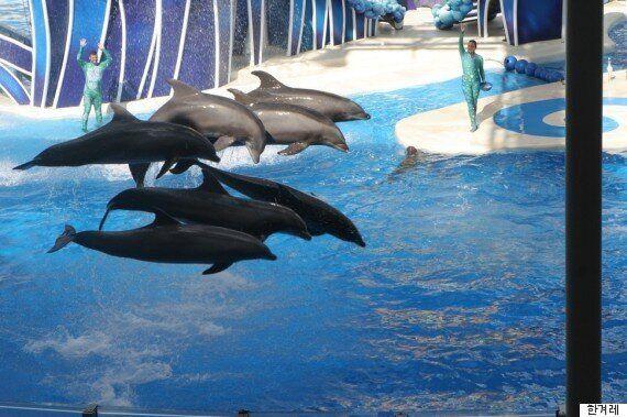 영화 '프리윌리'의 범고래가 살았던 '멕시코 수족관' 최신