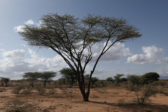 그렇게, 케냐에
