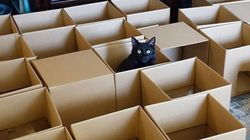 미로에 갇힌 이 고양이들은 탈출 따위 관심