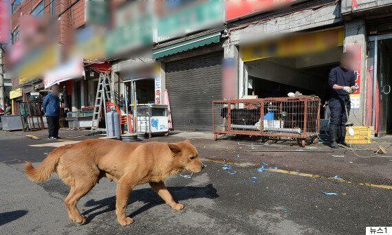 전기 쇠꼬챙이로 개를 도살해도 동물 학대가 아니라고 판단한