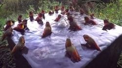 벌새들이 '풀 파티'를 즐기는 모습은 좀 귀엽다