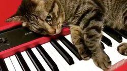 고양이 두 마리가 선보인 그들의 음악